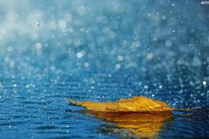 HD Leaf and Rain Wallppaper