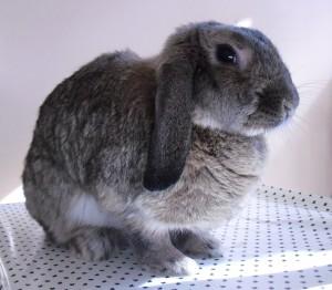 Natural Bunny In Habitat