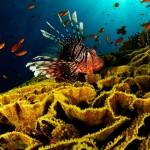 HD Underwater World Wallpaper