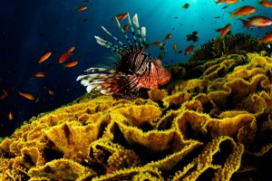 HD Underwater World Wallpaper