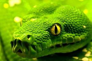 Green HD Wallpaper Snake