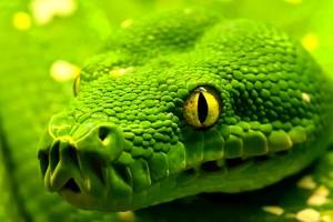 Green Tiger Snake