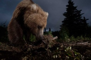 2012-national-geographic-photography-contest-winners-13