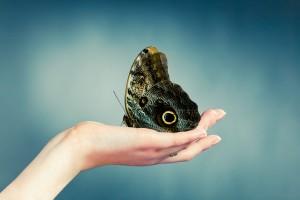 HD Rare Moth