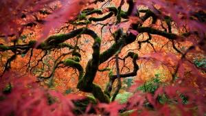 HD Japanese Garden