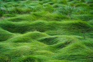 HD Green Grass Field