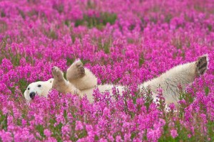 Polar Bear in a Flower Field