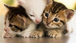 HD – Playful Kittens