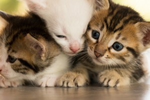 HDWallpaper Playful Kittens
