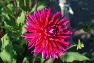 Flower Bouquet of Anemones