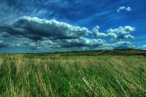 Grassy Plain Along the Road