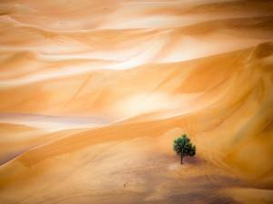 Sand Dune near Dubai