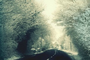Trees Bordered Winter Road