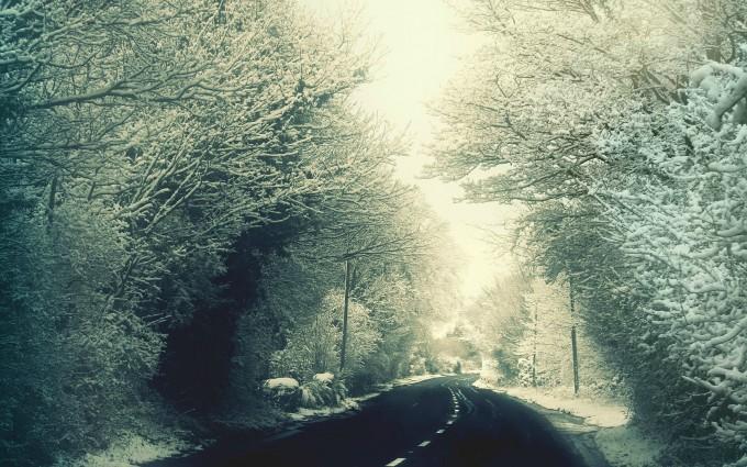 Trees Bordered Winter Road