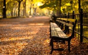 HD Fall Sunny Day