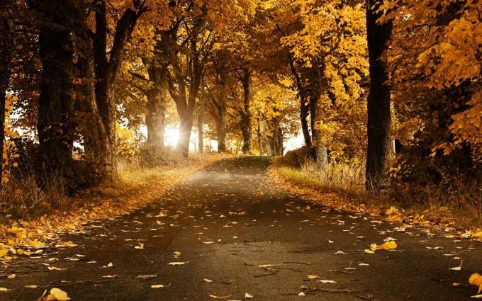 HD Fall Season Wallpaper