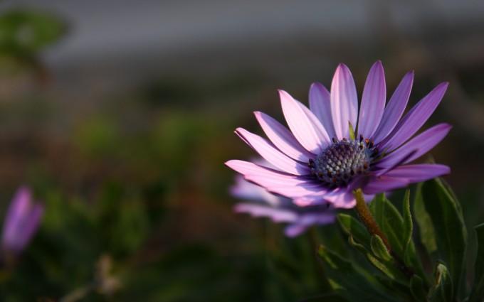 HD Violet Flower