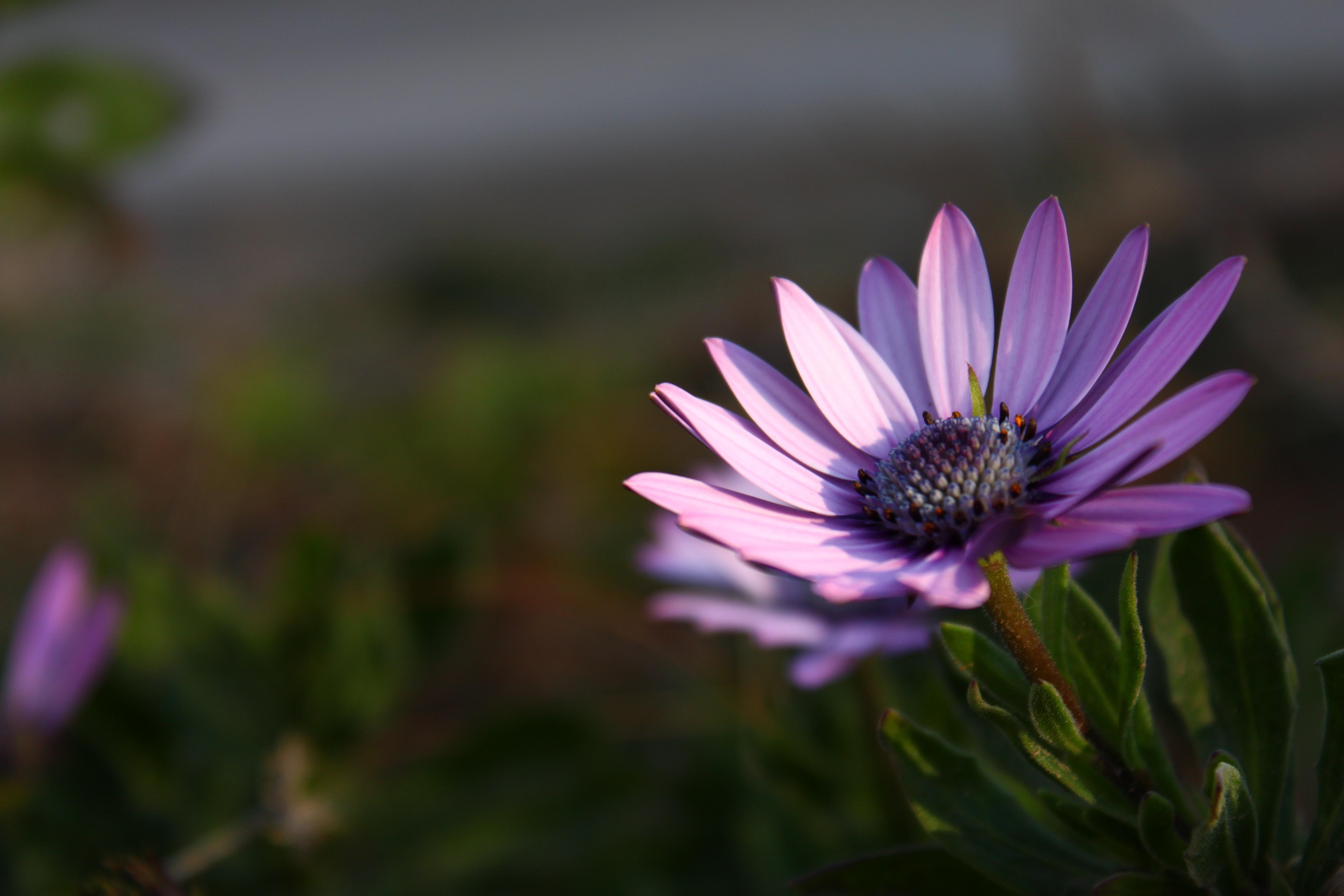 HD Violet Flower - HD Wallpaper Download