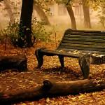 worn bench in a park in autumn