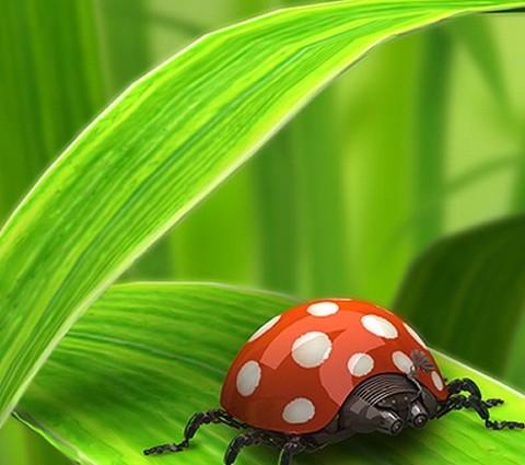 Smartphone Ladybug Wallpaper