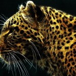 Magnificent Leopard Wallpaper